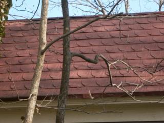 Durham Nc Shingle Roof A Community Winner Roof