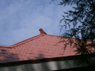 Red shingle roof guardian--beware